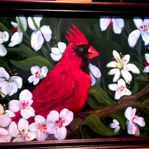 Cardinal In Blossems